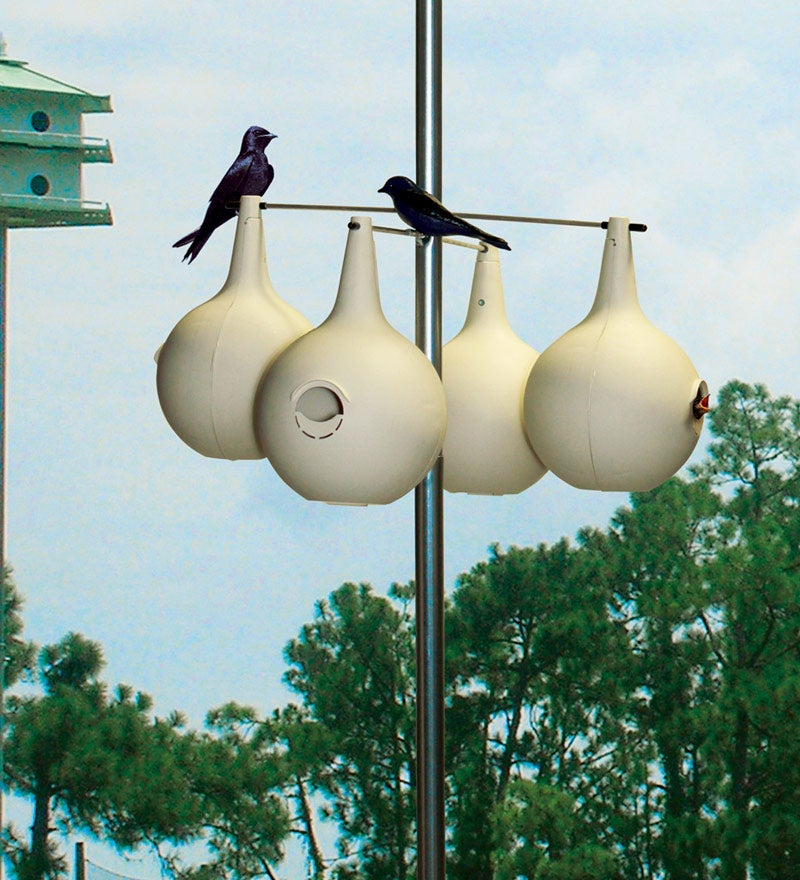 Purple Martin Gourd 8-pack & Pole Set, in Birdhouses (Home & Garden Decor) photo