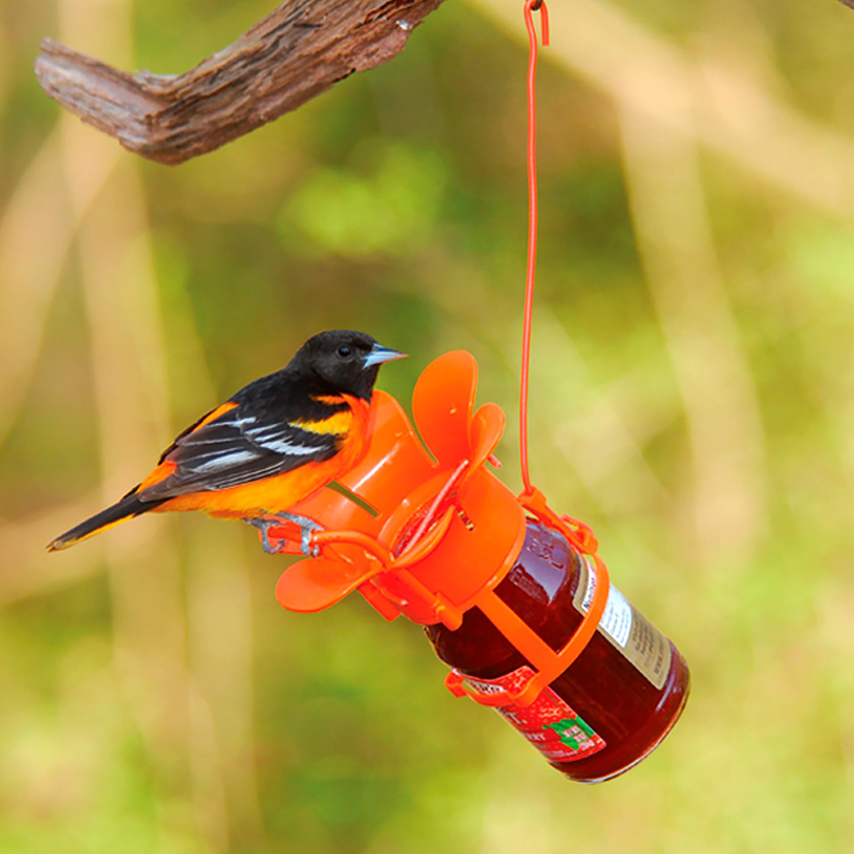 Jelly/Jam Jar Oriole Bird Feeder (Home & Garden Decor) photo