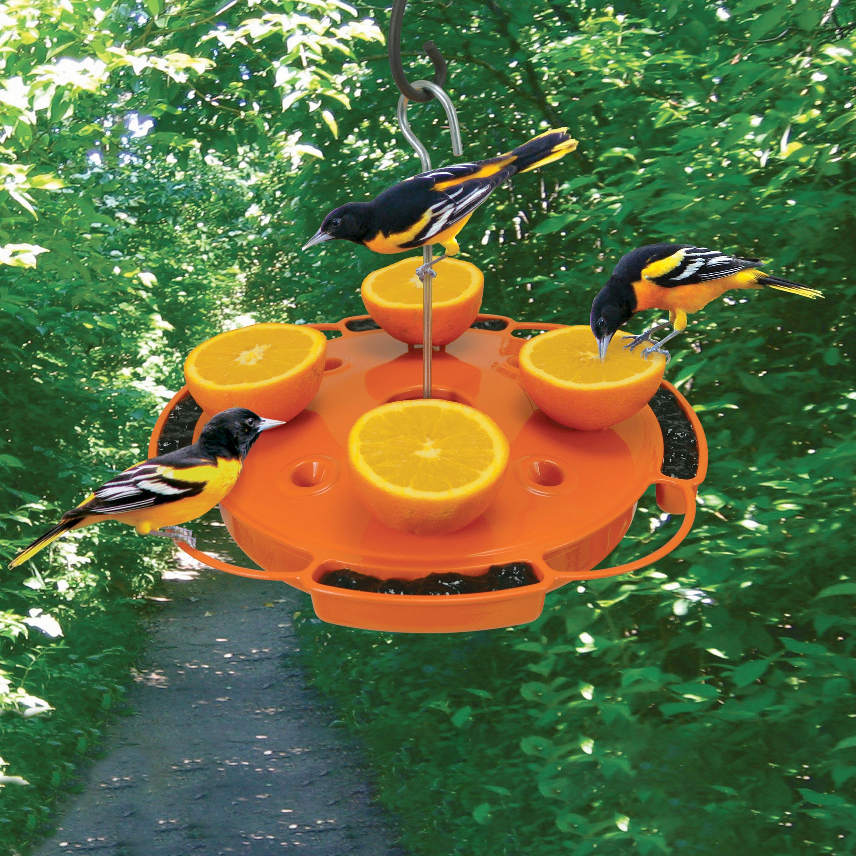 Ultimate Oriole Fruit, Jelly and Nectar Bird Feeder (Home & Garden Decor) photo