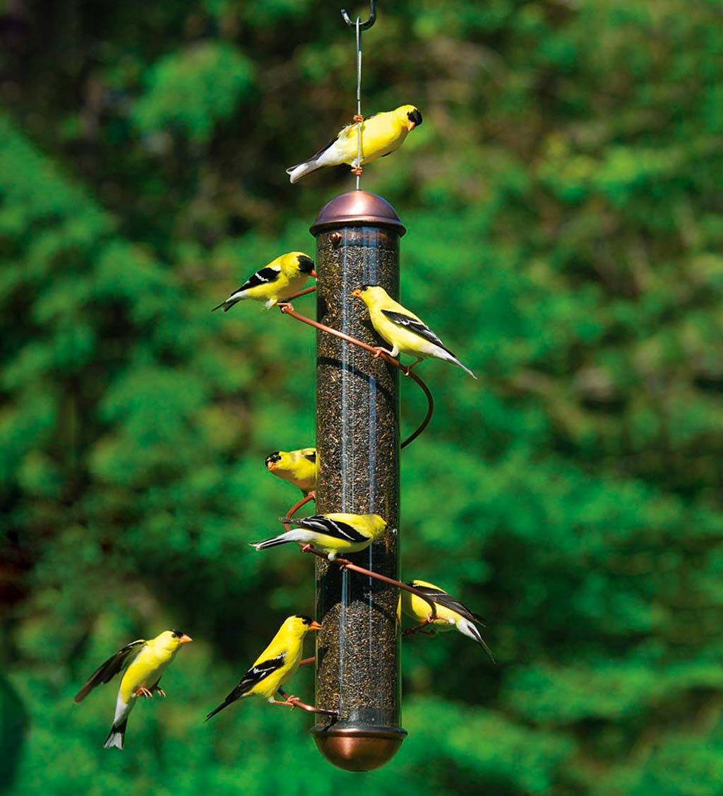 Copper-Colored Spiral-Perch Finch Bird Feeder