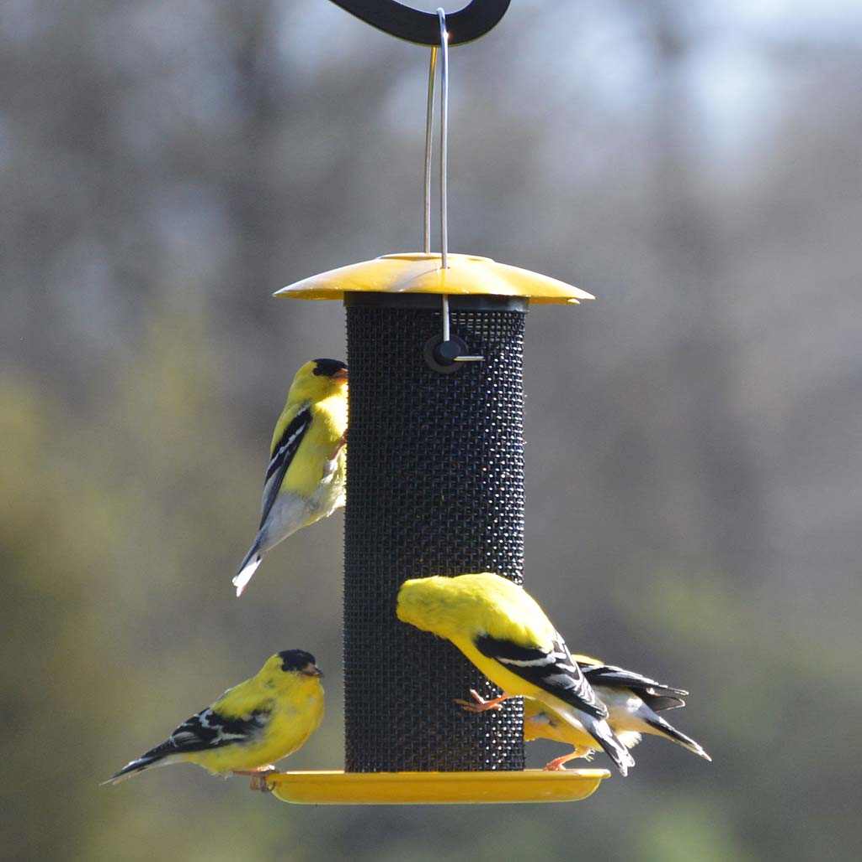 Petite Yellow Thistle Seed Bird Feeder (Home & Garden Decor) photo