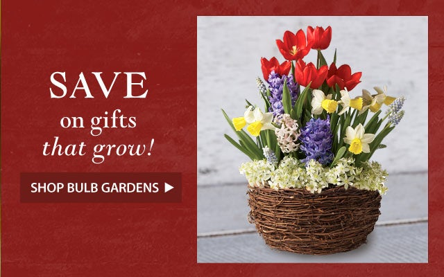 SAVE on gifts that grow! Shop Bulb Gardens