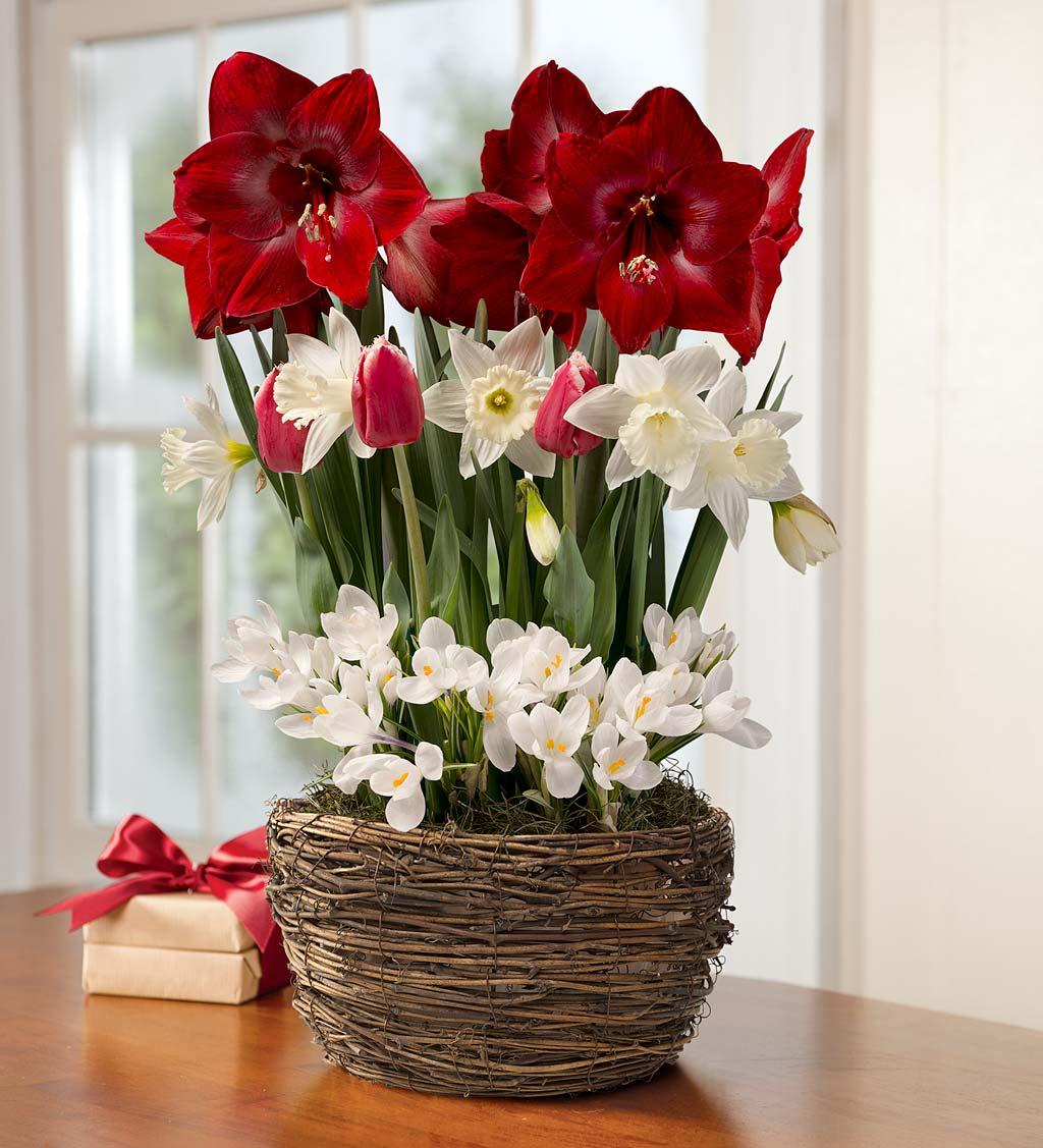 Assorted Dutch Flower Bulb Holiday Gift Garden