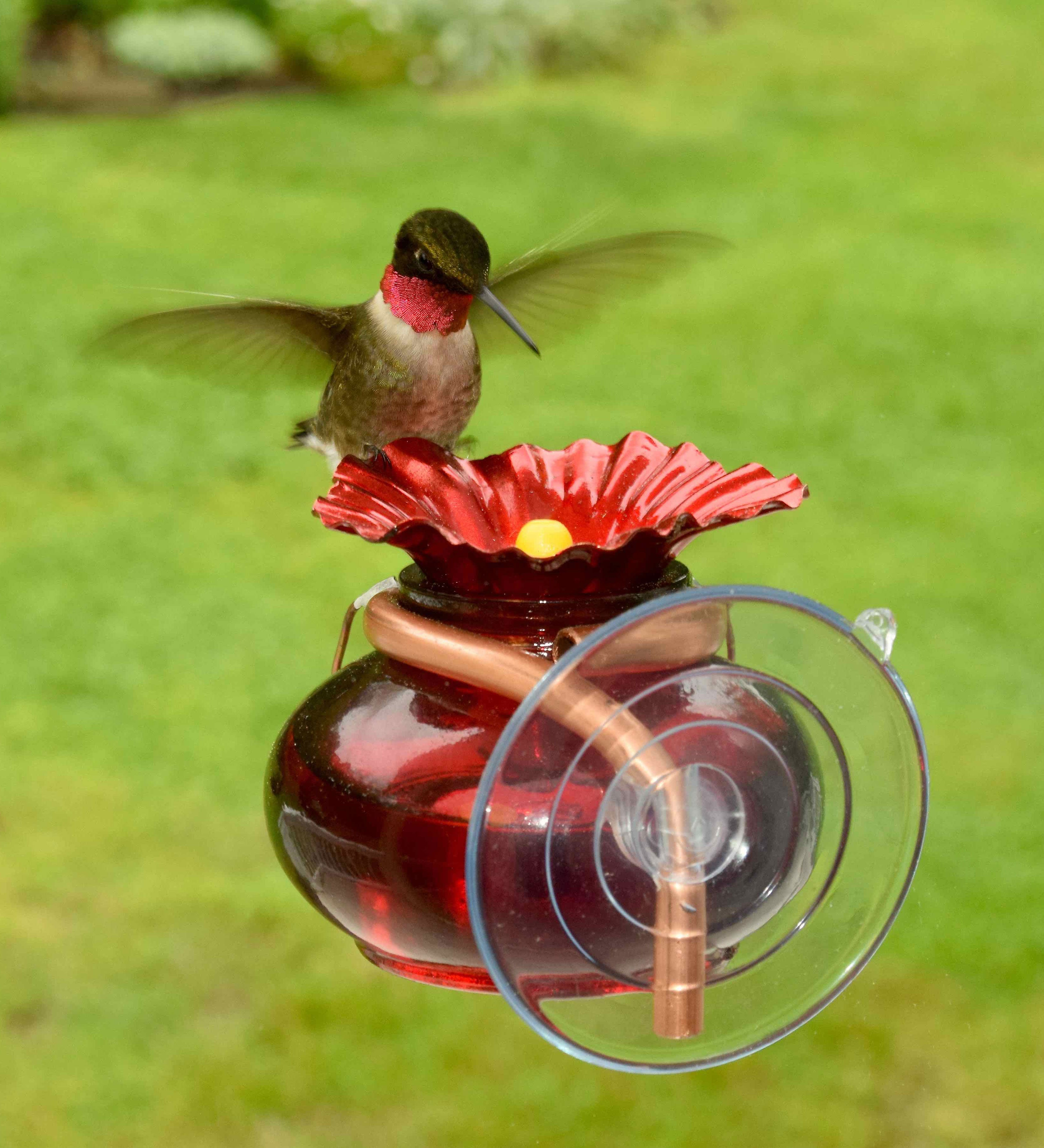 Window Watch Hummingbird Feeder