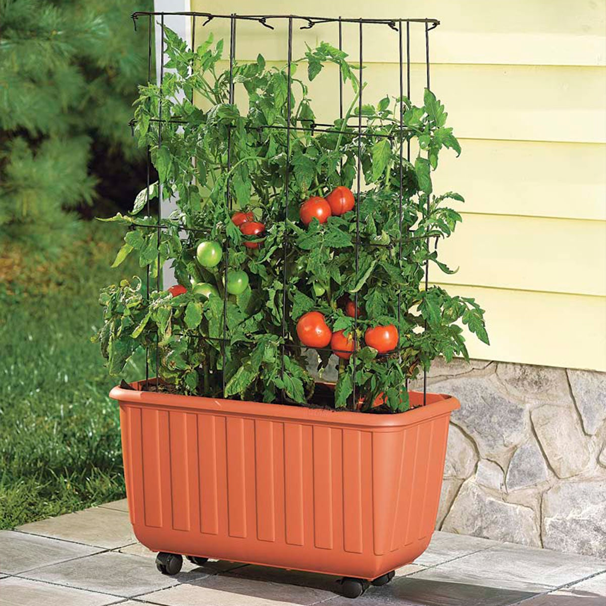Rolling Self-Watering Tomato Planter and Rust-Resistant Tower