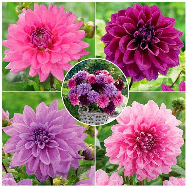 flower bulb gardens