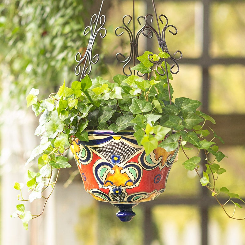 hanging planter with ivy