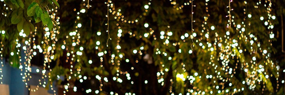 lighted trees backyard